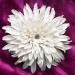 xrizantema1_0.jpg